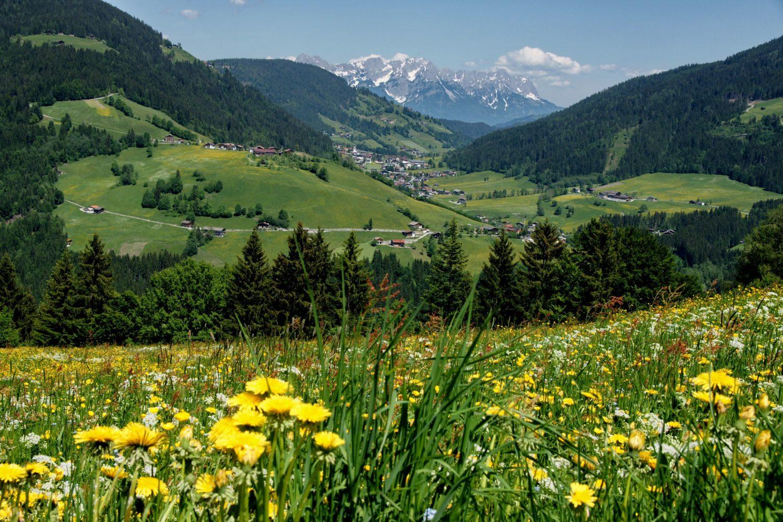 Kitzbüheler Alpen Frühlingswiese